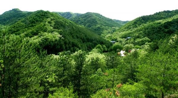 太统森林公园